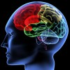 Scanning of a human brain
