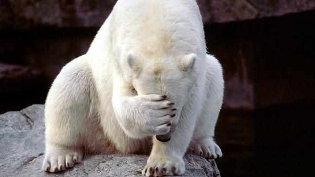 Polar bear shame